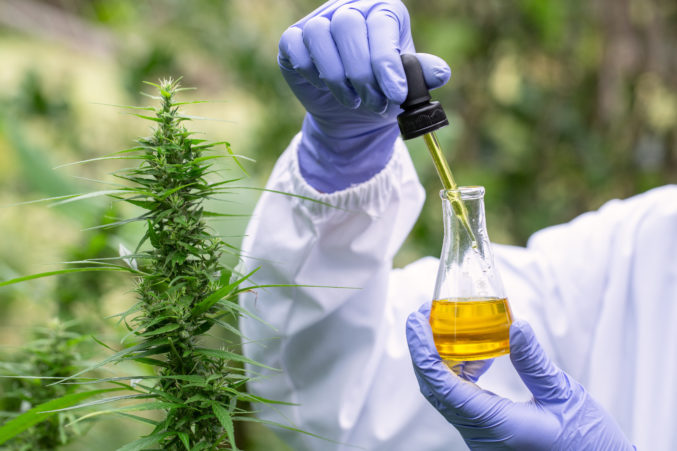 Researching CBD can help weight loss